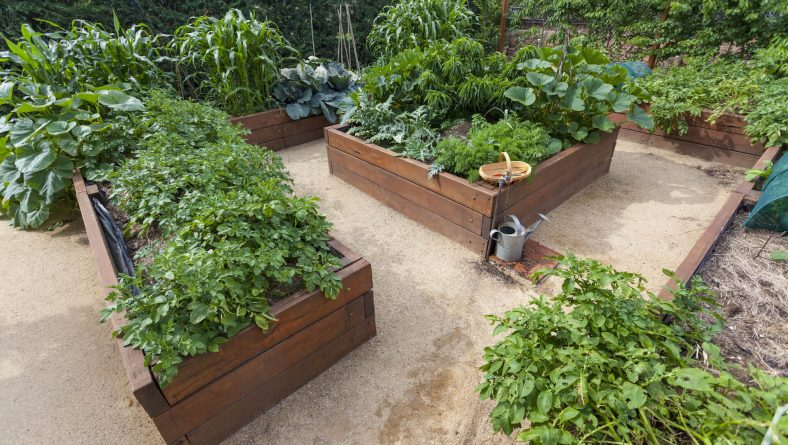 The Upsides of Raised Beds for Your Garden